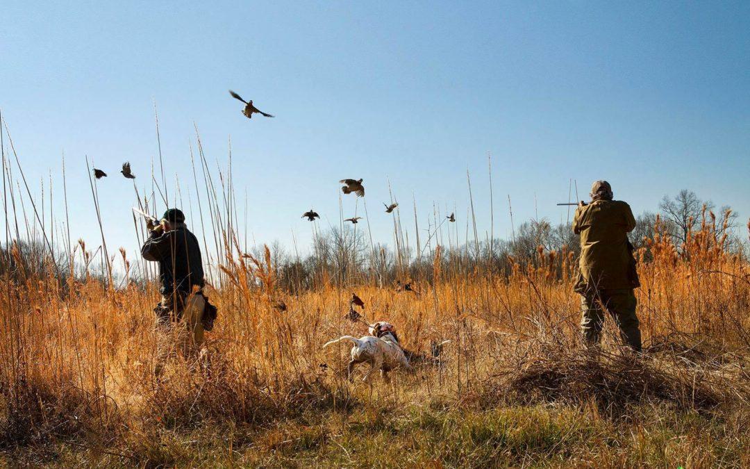 Prairie Wildlife